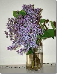 lilac-17apr10