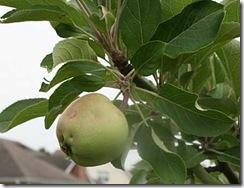 apple-10jun10