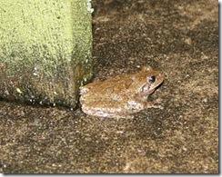 frog-july2010