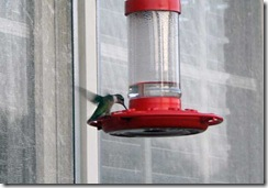 hummingbird-aug2010