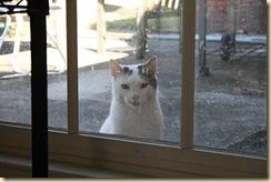 straycat-19sep2010