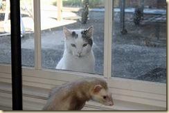 straycat2-19sep2010